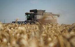 Ukraine tuyên bố cấm nhập khẩu lúa mì, dầu hướng dương và nhiều hàng hóa khác của Nga