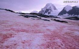"""""""Tuyết dưa hấu"""" lại xuất hiện, Nam Cực chìm trong màu đỏ"""