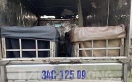 Tài xế giấu 2 phụ nữ trong thùng xe tải trốn khai báo y tế ở Hải Dương