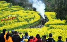 7 ngày qua ảnh: Đoàn tàu hơi nước đi qua cánh đồng hoa cải nở vàng
