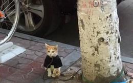 """Chú mèo xinh xắn ngồi cạnh gốc cây, ai đi qua cũng thích thú nhưng """"các thêm tiền"""" cũng không dám lại gần vì nhìn thấy thứ này"""