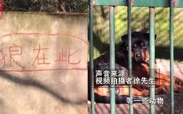 Sở thú Trung Quốc bị chỉ trích vì nhốt chó vào chuồng rồi bảo khách đấy là sói
