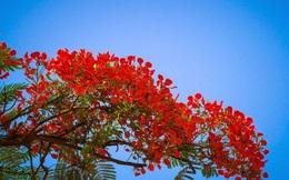 Hải Phòng sẽ bắn pháo hoa trong lễ hội Hoa phượng đỏ 2021