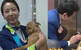 Chú chó mê gái khét tiếng ở sân bay Hàn Quốc: Thấy tiếp viên nữ là sấn sổ bổ nhào, gặp tiếp viên nam thì thờ ơ tránh né