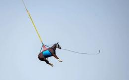 7 ngày qua ảnh: Vận chuyển ngựa bằng trực thăng ở Thụy Sĩ