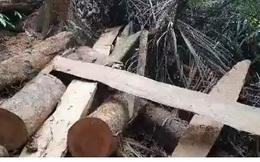 """Ai """"tiếp tay"""" cho lâm tặc đưa gỗ ra khỏi rừng phòng hộ tại Quảng Trị?"""