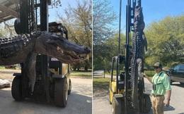 Mổ bụng con cá sấu dài gần 4m, người dân ngỡ ngàng khi bí mật hơn 20 năm trước được hé lộ