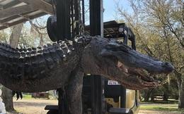 Mỹ: Mổ bụng cá sấu nặng 200kg, giật mình với những thứ bên trong