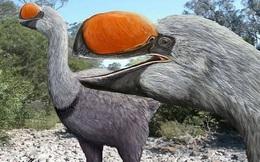 Bí ẩn về loài chim đi bộ lớn nhất thế giới từng tồn tại, nặng bằng một con bò