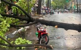 Cây xanh bất ngờ bật gốc đè trúng tài xế xe ôm đang chở khách nữ, cả 2 phải nhập viện cấp cứu ở Sài Gòn