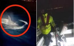 Clip: Bầy cá voi sát thủ hung hãn tấn công tàu, thủy thủ căng mình 'chiến đấu'