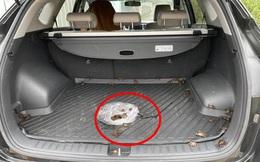 Mua cua về ăn, chủ xe hơi tái mặt khi nhìn hình ảnh cả đội bò lồm ngồm, ẩn náu trong xe