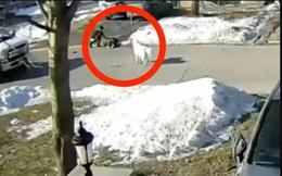 Chú chó bất ngờ chặn đường 1 chiếc xe tải, những gì diễn ra sau đó khiến ai cũng kinh ngạc