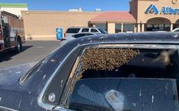 Chỉ 10 phút vào siêu thị, đàn ong mật 15.000 con chiếm xe hơi