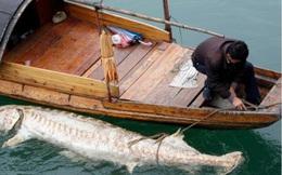 Chuyên gia TQ thừa nhận đập Tam Hiệp làm thay đổi sông Dương Tử
