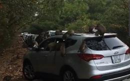"""Hàng chục chú khỉ """"đại náo"""" ôtô quên đóng cửa ở Cần Giờ"""