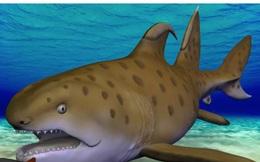 'Cá mập Godzilla' 300 triệu năm tuổi được xác định là loài mới