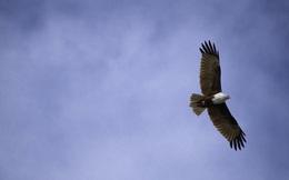 Quy luật thành công ít người biết: Bạn không thể bay với đại bàng nếu tiếp tục đàn đúm với lũ gà tây