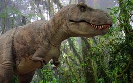 Bạn có thể không cần chạy nhanh hơn một chú T. rex - Đi bộ là đủ nhanh hơn nó rồi