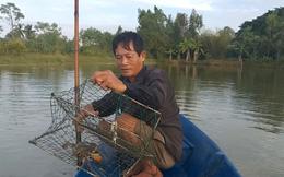 Cua biển Cà Mau đạt mức giá 800.000 đồng/kg, dân Cà Mau phấn khởi