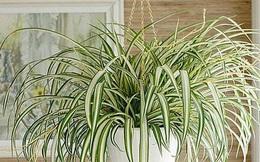 """12 loại cây trồng trong nhà phù hợp nhất với từng không gian, lại là """"máy lọc không khí"""" cực tốt"""