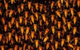'Mật ong điên': Nguy hiểm nhất trong 300 loại mật ong trên thế giới, gây ảo giác hiếm gặp - Nó đến từ đâu?