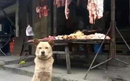 Được chủ quán thịt cưu mang 1 lần, chú chó lang thang kiên trì báo ơn suốt 4 năm theo cách ít ai ngờ tới