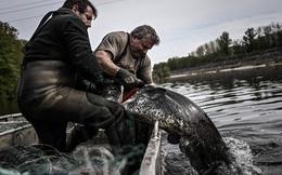24h qua ảnh: Ngư dân bắt được cá nheo khổng lồ ở Pháp