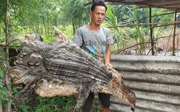 TP. HCM: Bắt được cá sấu 70kg trong vườn, người đàn ông xẻ thịt, lột da rồi mang đi chia