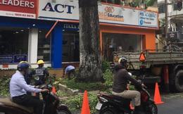 Cây bị tét nhánh rơi xuống đường đè trúng xe máy, xe đạp gây hư hỏng ở Sài Gòn