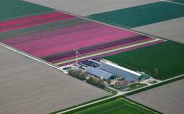 24h qua ảnh: Cánh đồng hoa đẹp như tranh vẽ ở Hà Lan