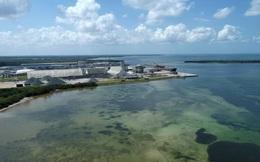 Florida (Mỹ)tuyên bố tình trạng khẩn cấp vìnguy cơ vỡ hồ nước độc hại