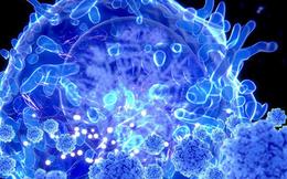 Tế bào T gần như nguyên vẹn trước các biến thể