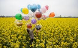 24h qua ảnh: Cô gái chụp ảnh giữa cánh đồng hoa cải vàng rực