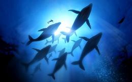 Nghiên cứu mới lần đầu tiên chứng minh: Tất cả sinh vật biển ngày càng di chuyển xa xích đạo