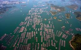"""""""Cơn lốc"""" thuốc kháng sinh bóp nghẹt Trung Quốc: Vì yêu cá, người nuôi dùng luôn """"hàng cấm"""""""