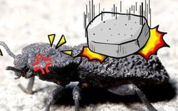Đây là loài bọ 'mình đồng da sắt' của thế giới tự nhiên, ô tô 1,6 tấn cán không chết