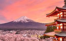 Hoa anh đào Nhật Bản bung nở đẹp mỹ mãn lần đầu tiên trong suốt 1200 năm, nhưng ẩn sau đó là một thảm họa đáng sợ
