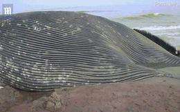"""Cận cảnh xác cá voi xanh dài 18m lần đầu trôi dạt bờ biển châu Phi, cách xa """"nhà"""" 8.000km"""