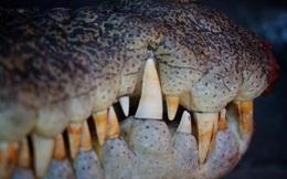 Đang ngồi trên thuyền, bị cá sấu khổng lồ 5 mét chồm lên cắn