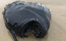 Xác quái vật biển sống ở độ sâu gần 1.000 mét trôi dạt bờ biển Mỹ