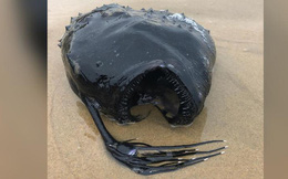 """Mỹ: Cá """"quái vật"""" hiếm có bất ngờ trôi dạt vào bờ"""