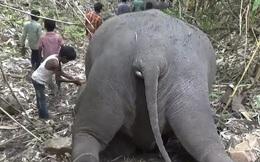 Sét lớn đánh chết 18 con voi ở Ấn Độ
