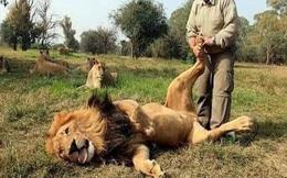 """Chỉ với vài hành động đơn giản, người đàn ông này đã làm những con sư tử đực """"hài lòng 100%"""""""