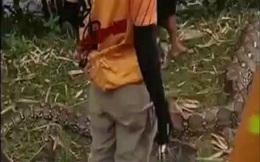 Indonesia: Nghi trăn khổng lồ dài 7 mét nuốt người, lôi ra mổ bụng kiểm tra