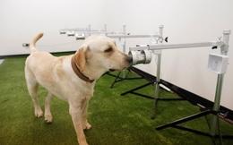 24h qua ảnh:  Chó đánh hơi để phát hiện người nhiễm Covid-19