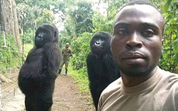 """Cư dân mạng cười """"ngả nghiêng"""" trước chùm ảnh selfie cùng khỉ đột của chú kiểm lâm"""