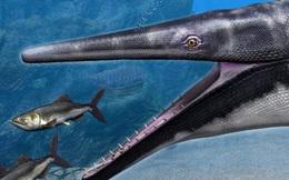 Phát hiện loài Thương long mới sở hữu cái miệng của loài cá sấu