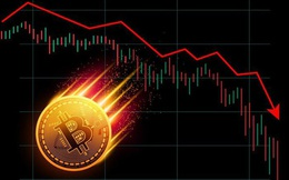 'Cá con', 'cá mập' đua nhau bắt đáy Bitcoin