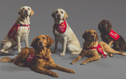 Quên nỗi sợ Pitbull đi, đây là những loài chó 'lấy lại hình ảnh' cho loài vật trung thành nhất với con người
